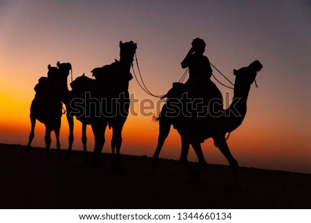 Camel silhouttes in Thar desert, Rajasthan, India #1344660134