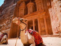 Camel sitting in front of the treasury of Petra, Jordan