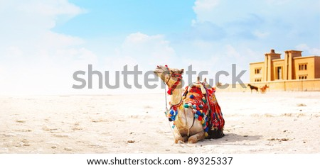Camel sitting on a desert land with tower and blue sky on the background
