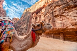Camel standing in front of the Al Khazneh tomb. The Treasury tomb of Petra, Jordan - Image, selective focus