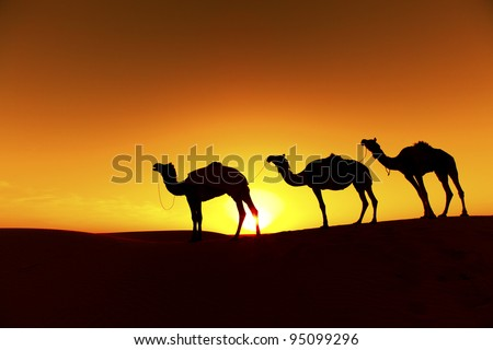 Camel train Silhouette on the Dunes of the Thar Desert, Rajasthan - India