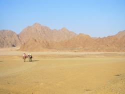 Camel travelers, camel ride on a desert safari in Egypt. Beautiful Egypt's desert landscape with camel riders.