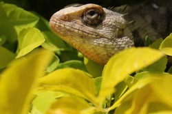 cameleon sitting in a plant inside