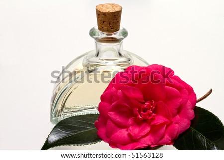 camellia oil and camellia flower. - stock photo