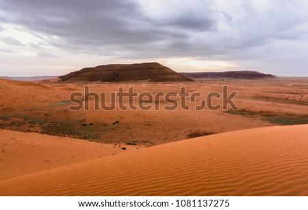 camels and desserts in Saudi Arabia