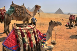 Camels and Giza Pyramids, Cheops, Chephren and Mykerinos, Egypt (HDR photo)
