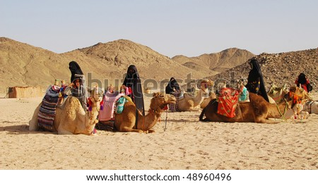 camels in desert, Egypt