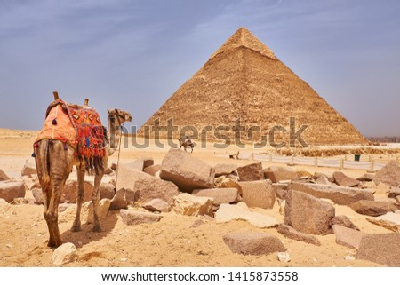 Camels in front of the The Pyramid of Khafre (Pyramid of Chephren), the second-tallest and second-largest of the Ancient Egyptian Pyramids of Giza, Giza Plateau, Cairo, Egypt