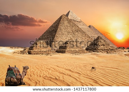 Camels in the sunset desert in front of the famous Pyramids of Giza