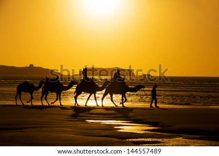 Camels on the beach at sunset in Essaouria, Morocco