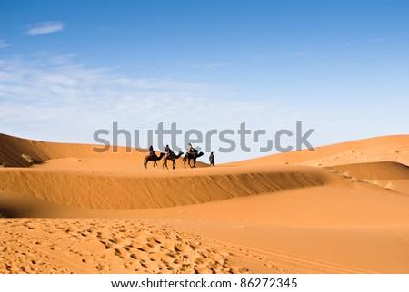 camels on the Sahara desert