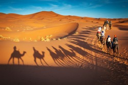 camels trekking guided safari tours in Merzouga Morocco Sahara desert camel tour with berber guide Dubai Oman Bahrain Kuwait riding camel shadows