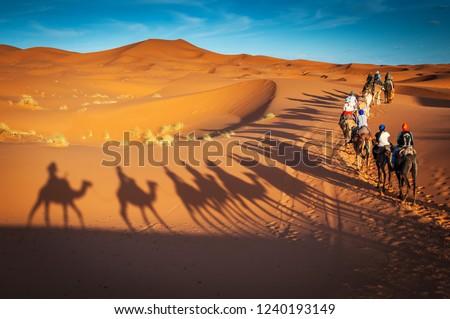 camels trekking guided safari tours in Merzouga Morocco Sahara desert camel tour with berber guide Dubai Oman Bahrain Kuwait riding camel shadows
