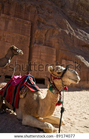 Camels waiting for tired explorers in tha ancient city of Petra in Jordan.