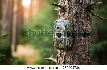 Camera trap or photo cameras mounted on pine tree in deep forest for wild animals location monitoring. copy space for text. Stock photo ©