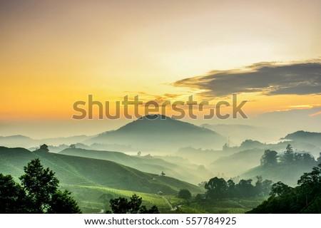 Stock Photo Cameron Highlands Sunrise  at green tea farm mountain. Dramatic moving cloud in nature landscape on sunshine morning.
