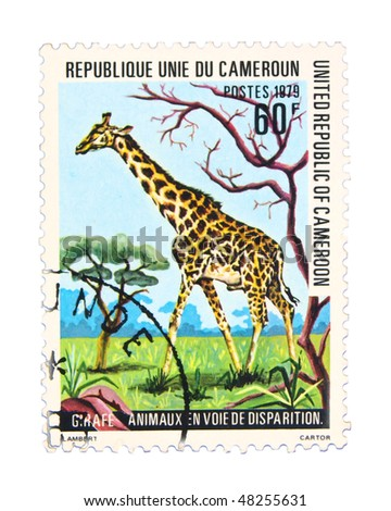 CAMEROON - CIRCA 1979: A stamp printed in Cameroon showing giraffe, circa 1979