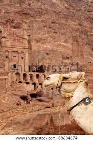 Cammels at Petra, Urn Tomb in the background, Lost rock city of Jordan. Petra's temples, tombs, theaters and other buildings are scattered over 400 square miles. UNESCO world heritage site - stock photo