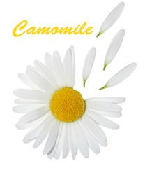 Camomile and petals on a white background