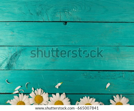 Camomile flowers on a bright turquoise background - Shutterstock ID 665007841