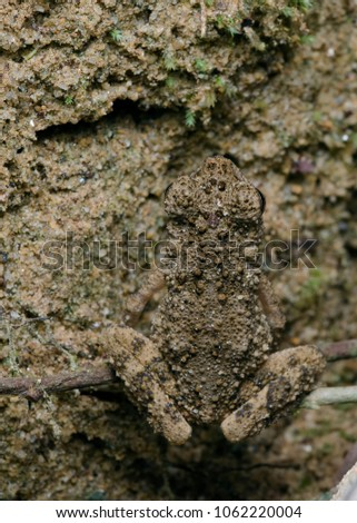 Camouflage Frog Picture