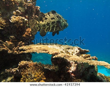 Camouflagued Fish in Great Barrier Reef Maine Park Australia