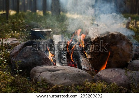 Campfire with big logs on the forest background
