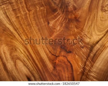 camphor laurel timber beautiful color timber