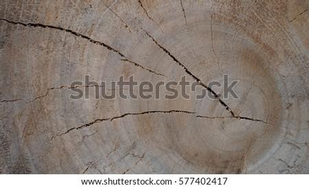 Camphor tree, round background texture #577402417