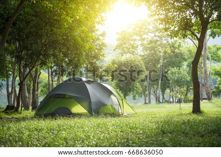 Camping and tent under the pine forest