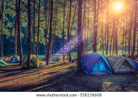 Camping and tent under the pine forest  in sunset at north of Thailand