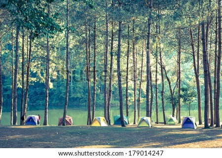 camping and tent under the pine ...
