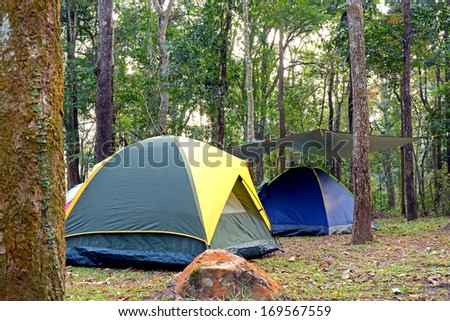 Camping tent underneath big trees in national park. #169567559