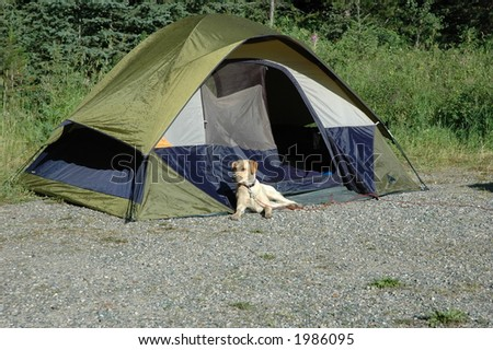 Camping with the dog