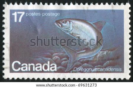 CANADA - CIRCA 1980: stamp printed by Canada, shows Atlantic Whitefish, circa 1980