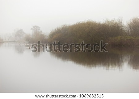 Stock Photo Canada geese in lake in the morning haze. Reeuwijk, the Netherlands.