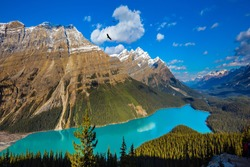 Canada. The turquoise lake  Peyto in Banff National Park. Mountain Lake as a
