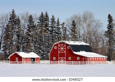 Canadian Barnyard