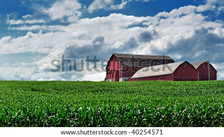 Canadian corn farm