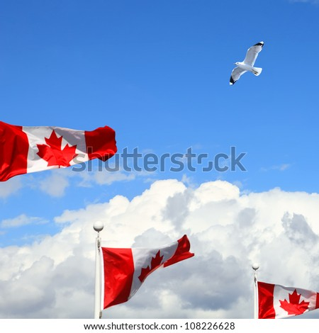 Canadian flags fluttering in the wind and white seagull over Vancouver. British Columbia,Canada