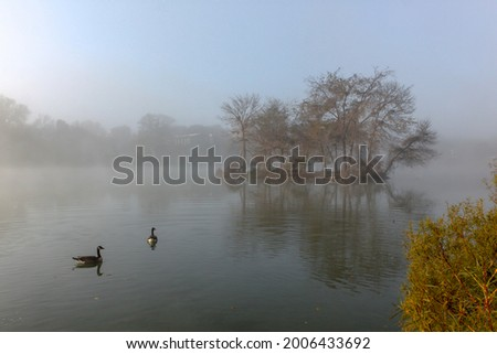 Canadian geese in a lake with light fog on an Autumn morning in Minnesota, USA Photo stock ©