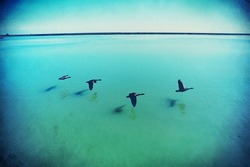 Canadian Geese over Lake Michigan handled in grunge style