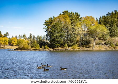 Canadian Geese Swimming in the Lake with Beautiful Fall Colors on the Surrounding Trees and Mountains at Lake Cuyamaca, California #760661971