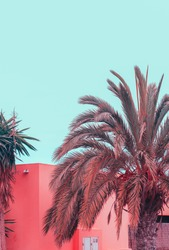 Canary island. Palm creative vibes. Plants on pink concept