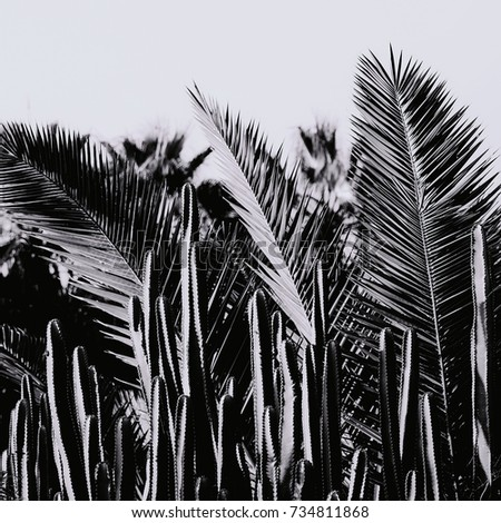 Canary Islands Tenerife Palms and Cactus minimal background