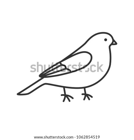 Canary linear icon. Thin line illustration. Songbird. Contour symbol. Raster isolated outline drawing