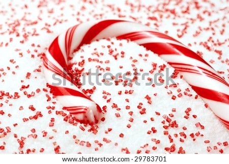 Candy Cane nestled in white and red sugar.  Macro with extremely shallow dof. Selective focus on end of candy cane.