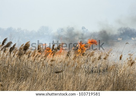 Cane field on fire close to village