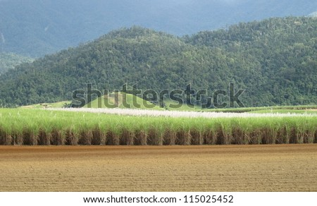 Cane fields and Blue Mountains 1