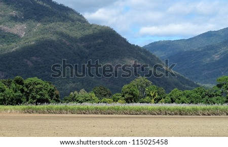 Cane fields and Blue Mountains 2